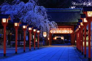 平野神社-1.jpg