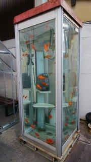 金魚ボックス-1.jpg