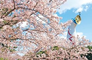 万博記念公園桜-1.jpg