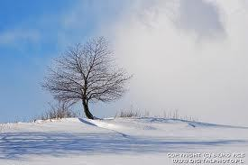 冬の景色-1.jpg