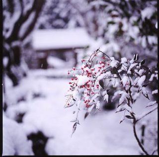 冬の景色-3.jpg