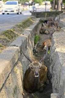奈良の鹿-1.jpg