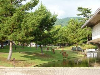 奈良公園-1.jpg
