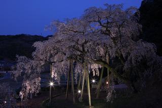 愛知県-岡崎市-奥山田の枝垂桜-2.jpg