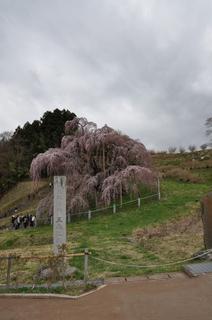 桜-3.jpg